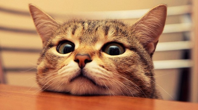 Вчені довели, що коти люблять людей більше, ніж їжу