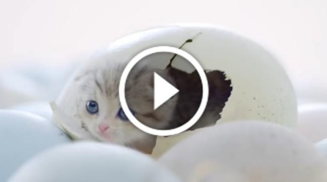 Наймиліша раклама з котятами у світі. Гарний настрій гарантовано!