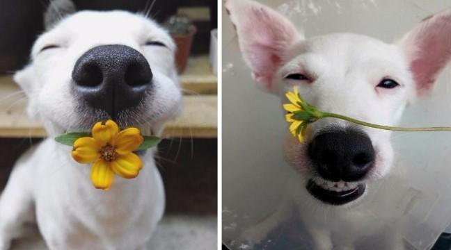 Цей чарівний любитель квітів – найромантичніший пес у світі