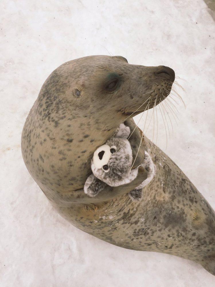 seal-hugs-plush-toy-3