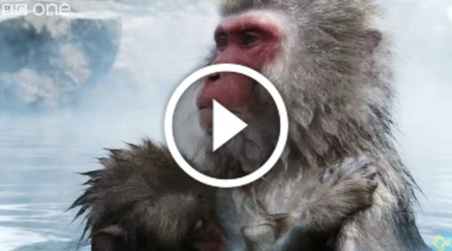 Це 2-хвилинне відео – найкраще, що я бачила про природу