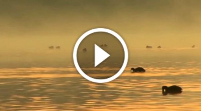 Надзвичайно розслаблююча музика від Людовіка Ейнауді
