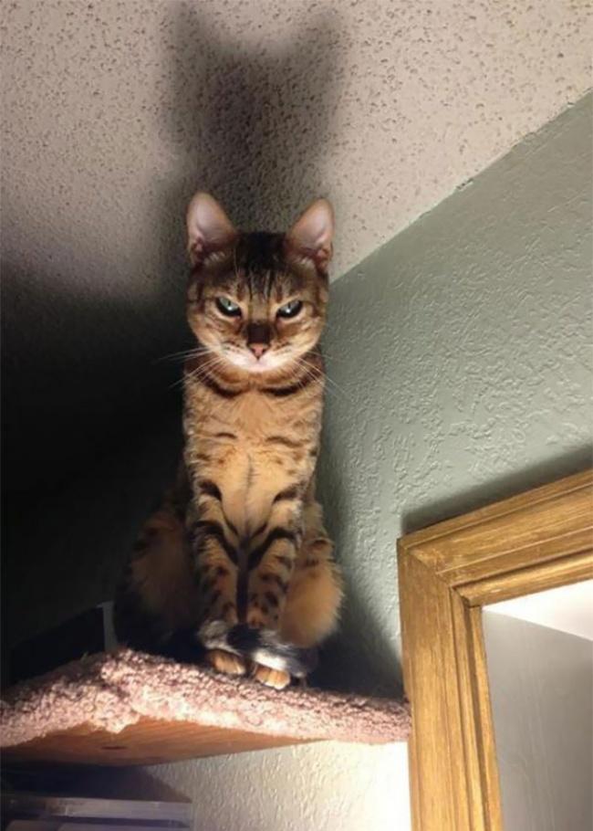 29524615-Evil-Cats-Demons-Summoning-Satan-102-58d0d5127832f__605-1491475826-650-b77591b6d5-1491554671