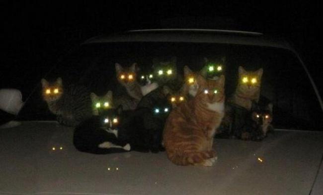 29524815-evil-cats-demons-summoning-satan-24-58d2695988533__605-1491475833-650-5d2809cb89-1491554671