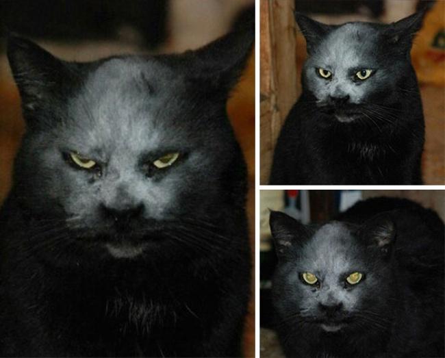 29525065-Evil-Cats-Demons-Summoning-Satan-121-58d0fd494e643__605-1491395180-650-549bc8ecce-1491554671