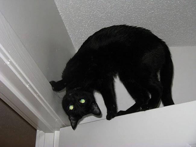 29525115-Evil-Cats-Demons-Summoning-Satan-125-58d223c94bf80__605-1491394831-650-828229a2cc-1491554671
