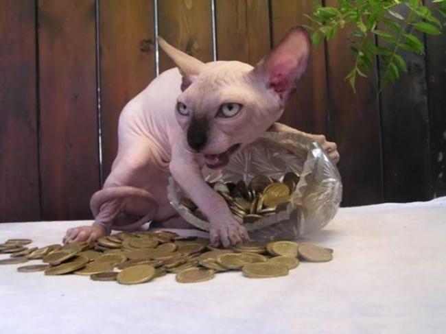 29525165-Evil-Cats-Demons-Summoning-Satan-109-58d0e01037e37__605-1491394546-650-109d25ae81-1491554671