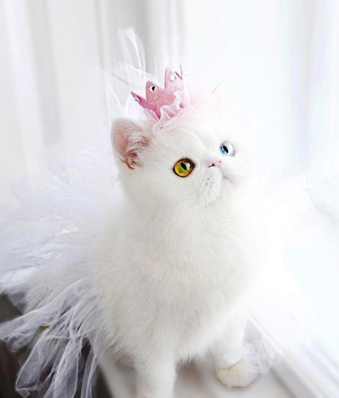 cat-eyes-heterochromia-iridis-pam-pam-16-58f869d8339f7__700