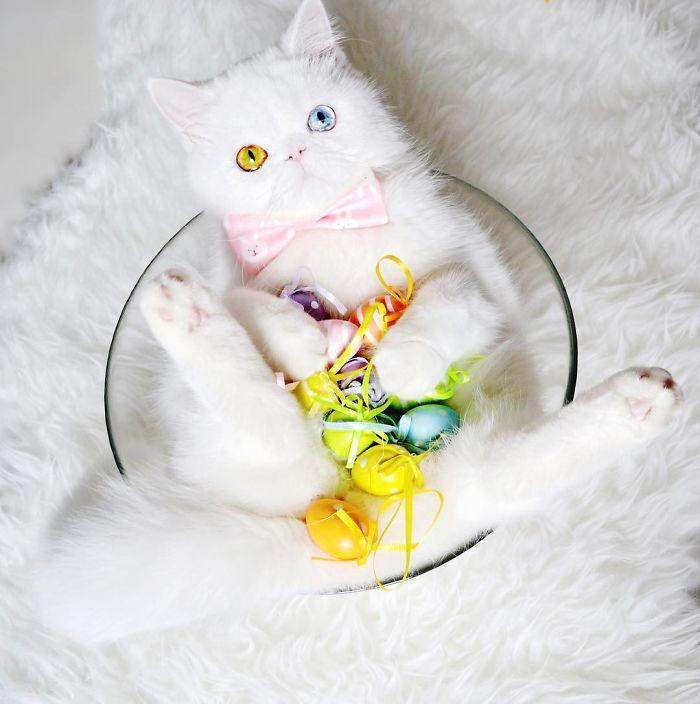 cat-eyes-heterochromia-iridis-pam-pam-27-58f869f56168d__700