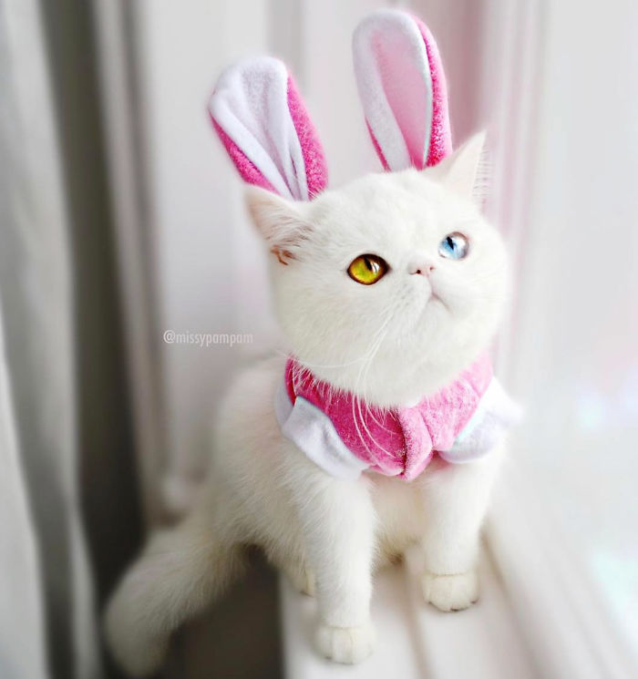 cat-eyes-heterochromia-iridis-pam-pam-28-58f869f854c14__700