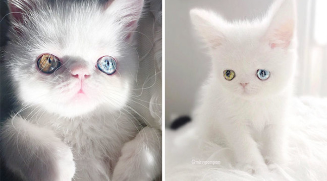 Зустрічайте Пам Пам – надзвичайно миле кошеня з космосом в очах