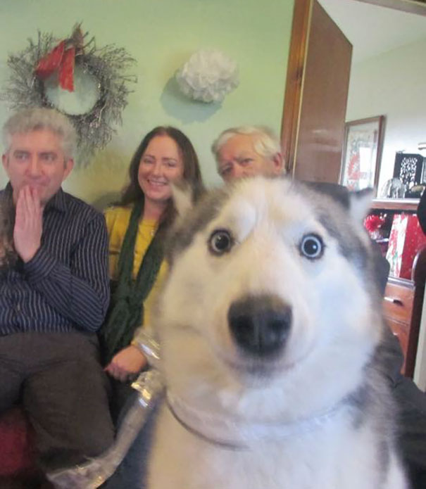 funny-dog-photobombs-36-58edc59d6fff4__605