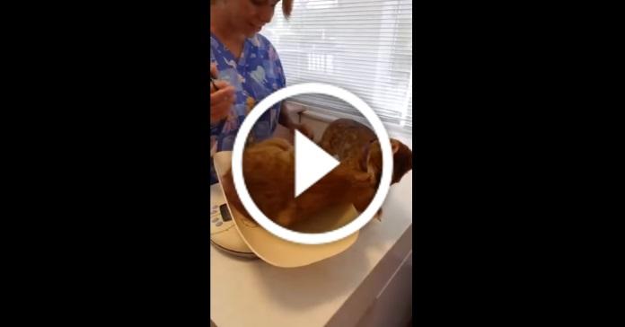 Кіт рятує свого друга від ветеринара. Це треба бачити!  :D