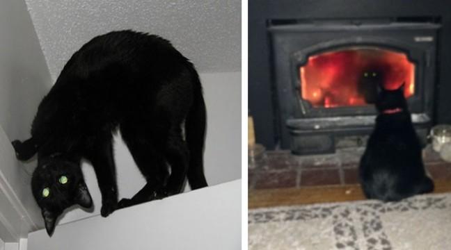 14 котів, які перейшли на бік зла