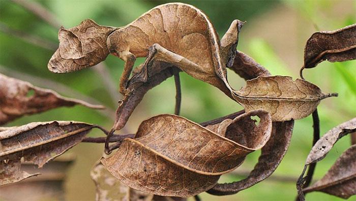 amazing-wild-animal-camouflage-nature-11-592687af627ee__700