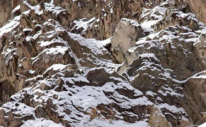amazing-wild-animal-camouflage-nature-14-5926904a8f4de__700