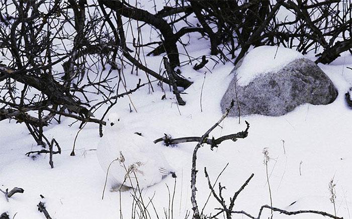 amazing-wild-animal-camouflage-nature-19-59269444f0dcb__700