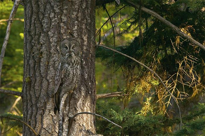 amazing-wild-animal-camouflage-nature-20-592694ec19dcd__700