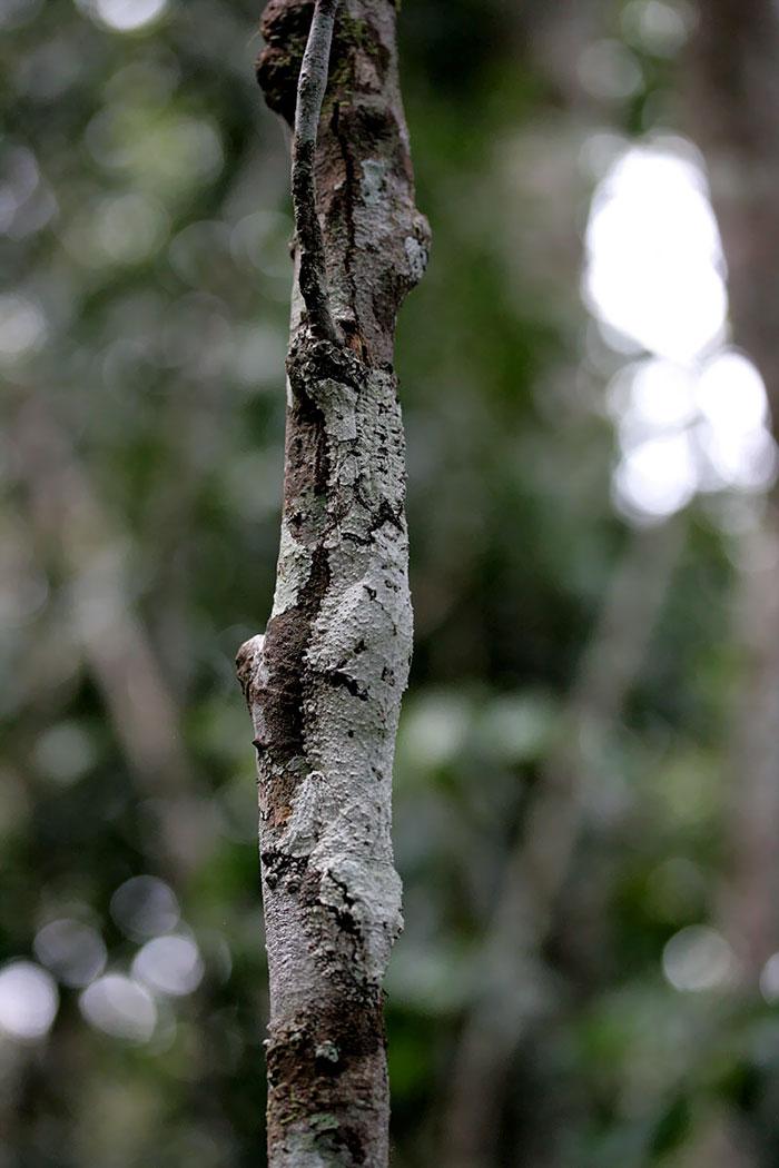amazing-wild-animal-camouflage-nature-201-5926de7517300__700