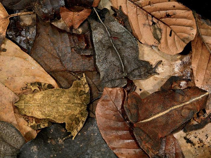 amazing-wild-animal-camouflage-nature-3-59258ed15be3d__700
