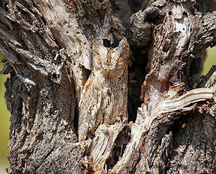 amazing-wild-animal-camouflage-nature-8-59258edad4f22__700