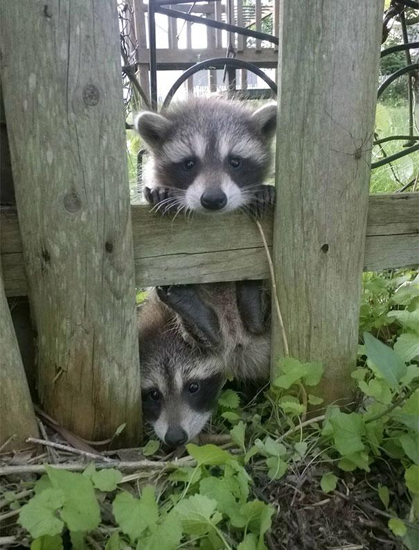 animals-visiting-people-315-591167da7798b__605