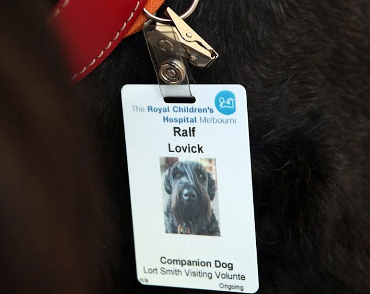 cool-hospital-dog-helping-children-ID