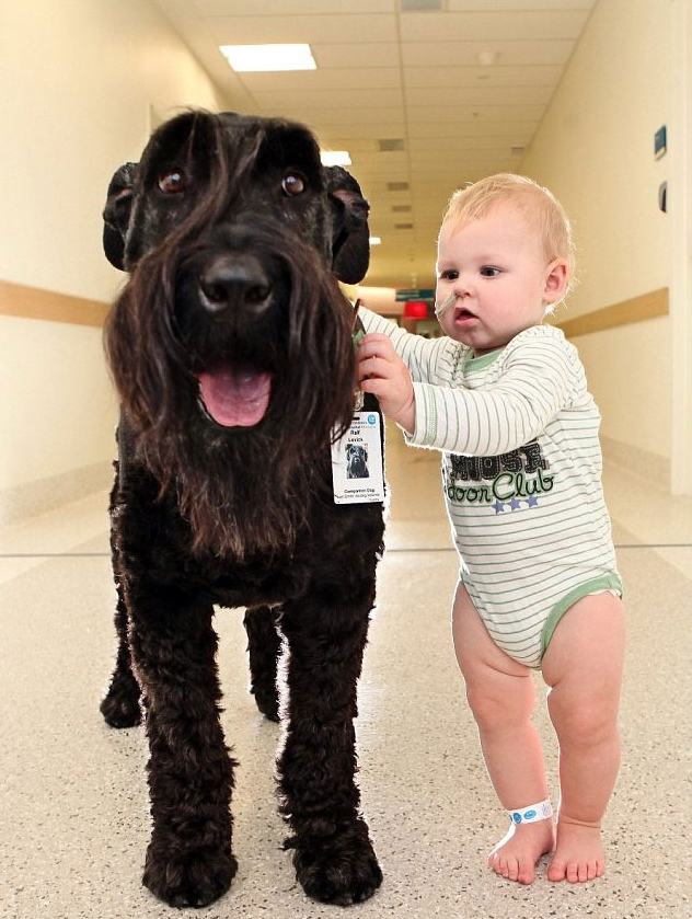 cool-hospital-dog-helping-children-walk