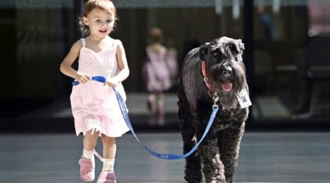 Коли собаки кращі за людей