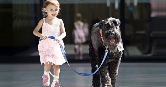 cool-hospital-dog-helping-children-walking-girl