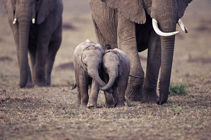 cute-baby-elephants-50-5902071911e92__700
