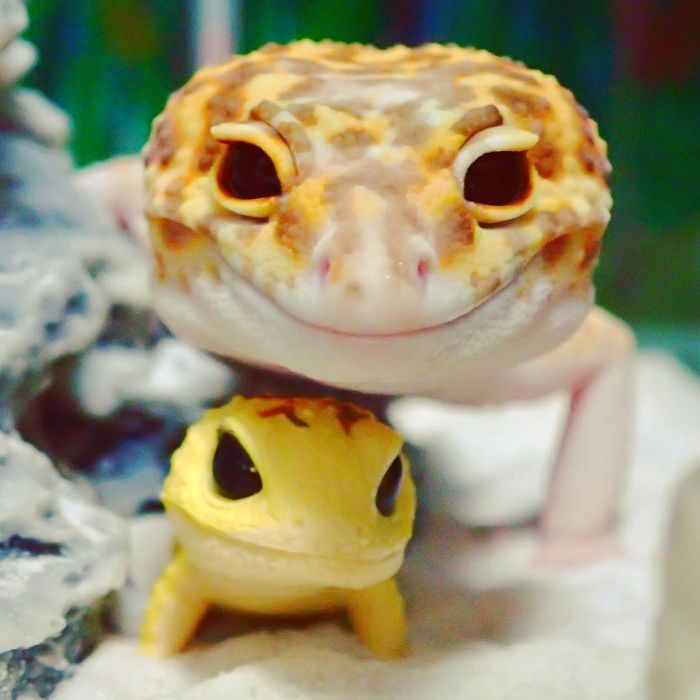 cute-happy-gecko-with-toy-kohaku-5-591e9c3dce145__700
