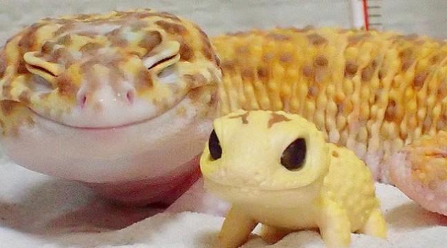 Гекон не може перестати усміхатися, коли біля нього є цей іграшковий гумовий родич