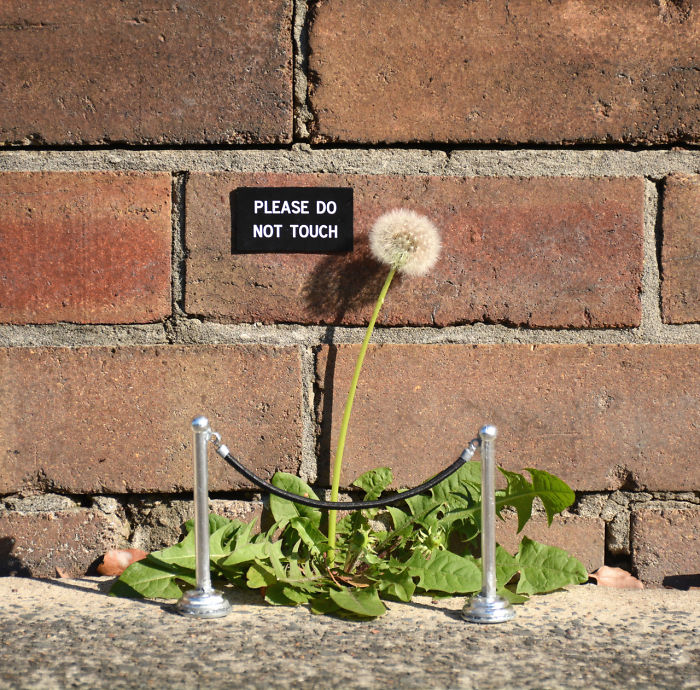 nature-street-art-74-58ee184d4d91c__700