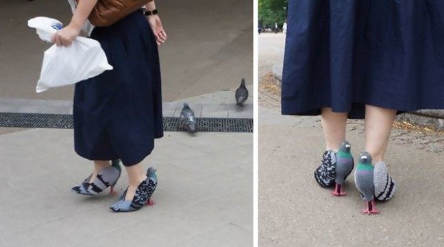 Фото дня: Взуття у вигляді голубів