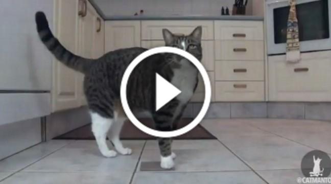 Книга рекордів Гіннесса присвоїла Діджі звання найрозумнішої кішки в світі