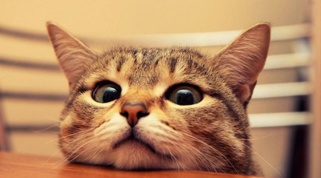 16 обов'язків кожного кота. Перевірте, чи ваш кіт все робить правильно