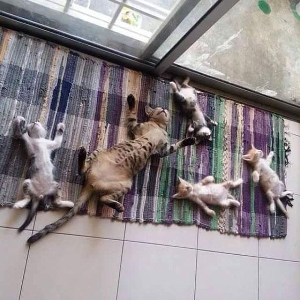 cats-worshiping-sun-1-5931069957475__605
