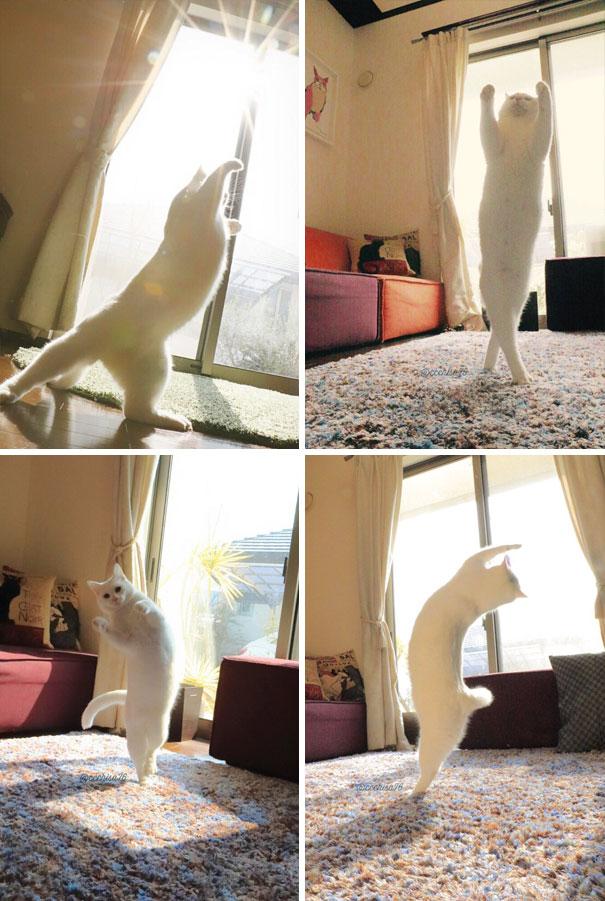 cats-worshiping-sun-38-593661ccbfd28__605