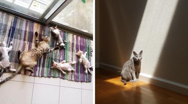 10 котів, які обожнюють сонце