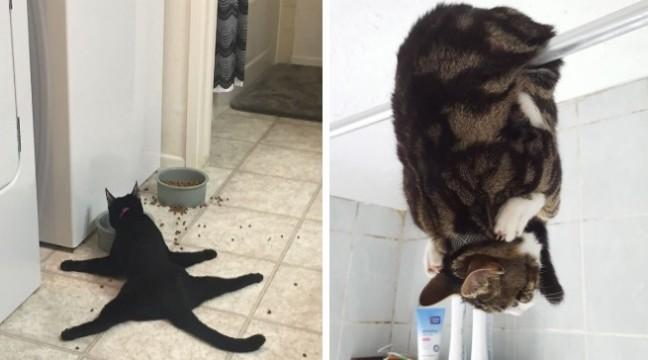 10 кішок з дуже дивними звичками (фото від власників)