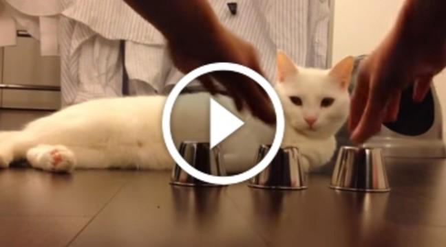 Лише погляньте, який цей кіт розумний