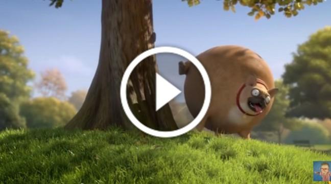 Що було б, якби всі тварини були круглими…