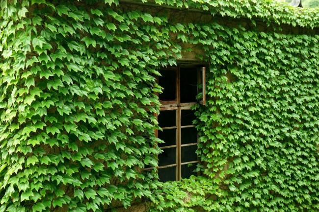 pueblo-verde-4