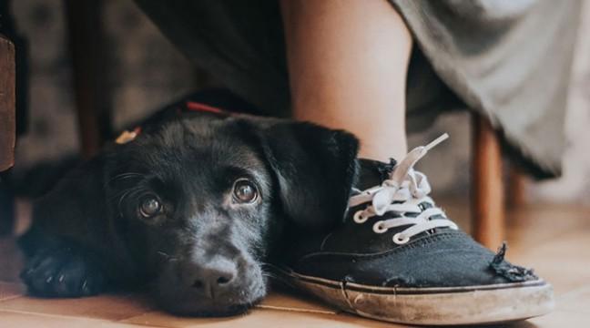 Фотографії переможців конкурсу Dog Photographer of the Year 2017