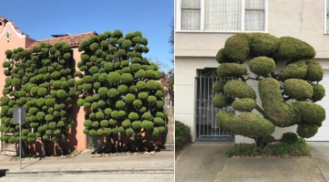 Фотограф знімає сюрреалістичні дерева у Сан-Франциско