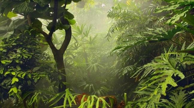 Знахар і учень у джунглях. Притча про життєві помилки