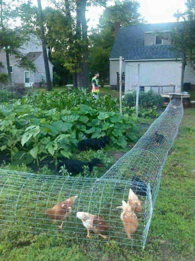 chicken-coop (4)