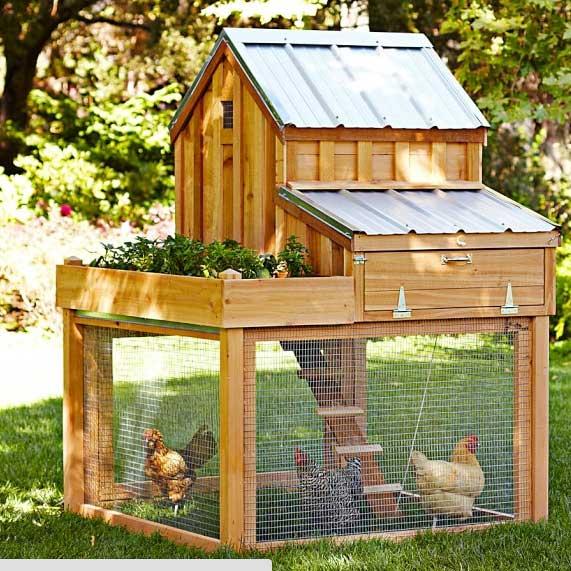 chicken-coop (5)