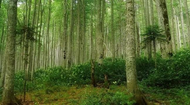 Карпатські ліси планують внести до списку всесвітньої спадщини ЮНЕСКО